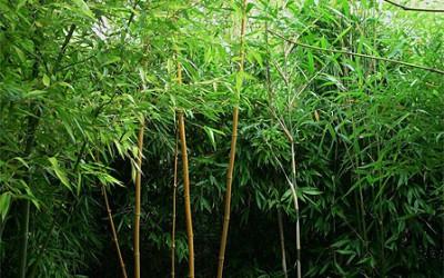 13_bambusove_zakouti